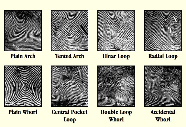 Galton's 3 basis fingerprint type patterns: whorl - loop - arch.